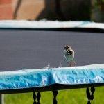 Upcycling: for the birds https://lifecurrentsblog.com