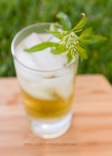Lemon Verbena Lemongrass Soda  Lemon Verbena & Lemongrass