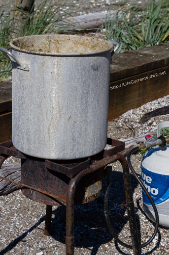How to Cook Dungeness Crab -- the cooking set up, outside with a propane burner and a BIG pot!