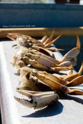 How to Cook Dungeness Crab to PNW way! by Life Currents