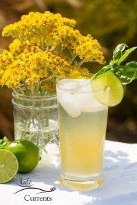 Basil Lime Sparkling Green Tea
