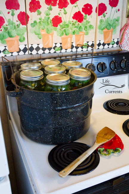 Spicy Garlic Dill Pickles - filled jars into the pot with the hot water
