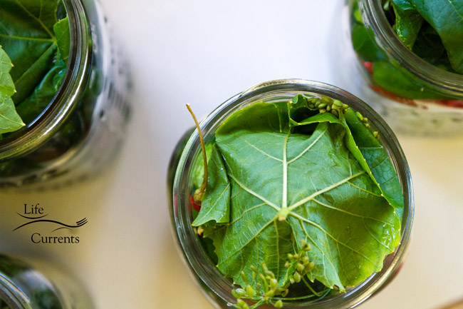 Spicy Garlic Dill Pickles - the grape leaf on the top of all the goodies in the quart jar before the brine goes in