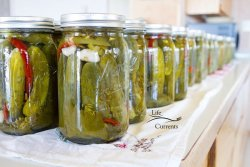 Mary's Spicy Garlic Dill Pickles - the finished quarts of canned Spicy Garlic Dill Pickles