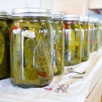 Spicy Garlic Dill Pickles