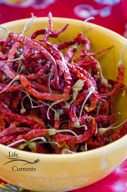 Spicy Garlic Dill Pickles - dried red chilies, these are called Ring of Fire Chilies