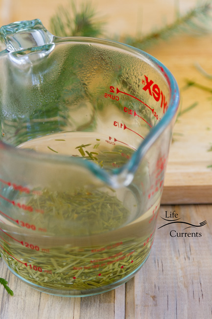HEaling Evergreen Tea Recipe - steeping