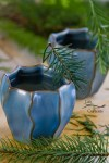 Healing Evergreen Tea - high in vitamin C, it's anti-oxidant rich, anti-inflammatory, and will help sooth a cough