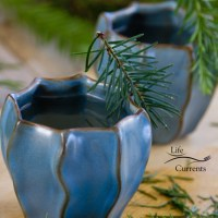 Healing Evergreen Tea
