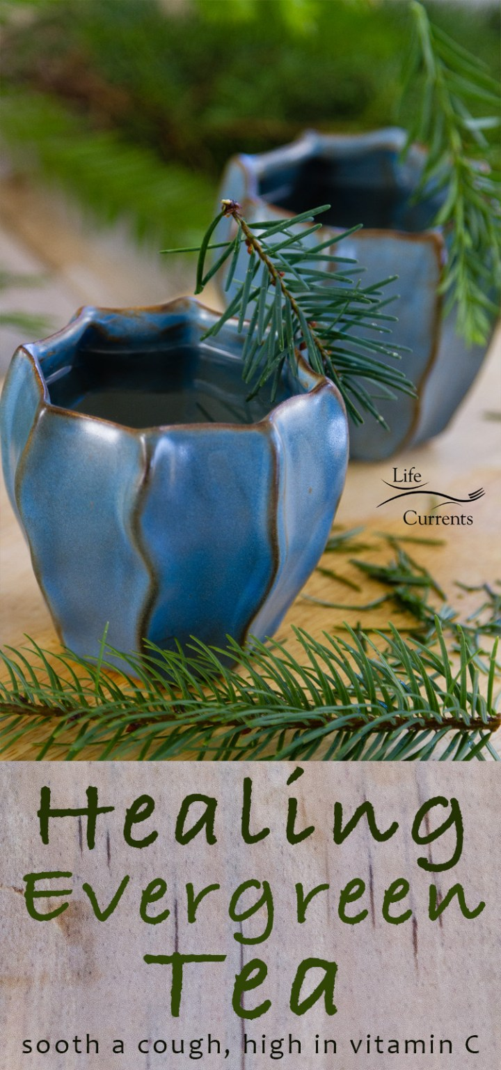 Healing Evergreen Tea - high in vitamin C, it's anti-oxidant rich, anti-inflammatory, and will help sooth a cough, and it smells like Christmas in a cup.