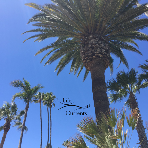 Can't Miss Activities on Catalina Island - palm trees blowing in the breeze