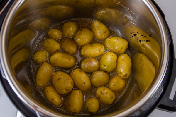 Baby potatoes at the bottom of the Instant Pot insert with broth