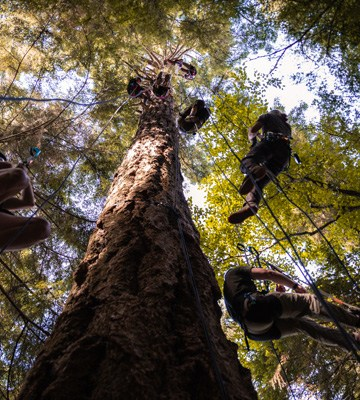 looking up the tree that the climbers are in