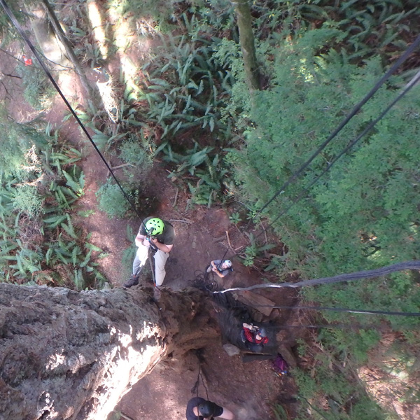 looking back down at the ground after starting the climb up the tall tree