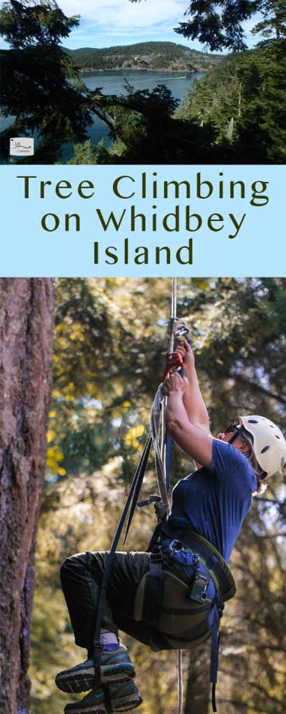 Tree Climbing on Whidbey Island long pin for Pinterest with two images and a title