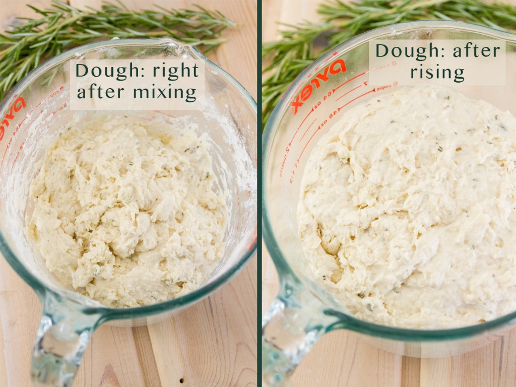 two side by side images comparing rising dough. Left: before rising, title on image: Dough: right after mixing. Right: title on image: Dough after rising. Both images looking down into the cup at the dough