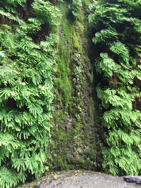 a waterfall on the Fern Canyon wall