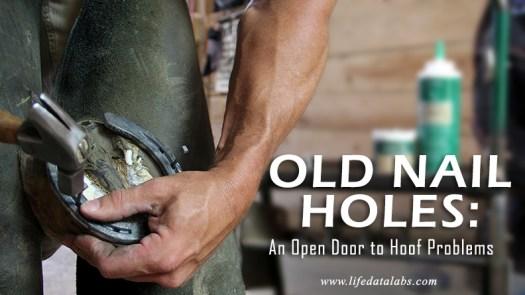 Nail holes in hoof