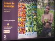 """Grown in Brooklyn"""