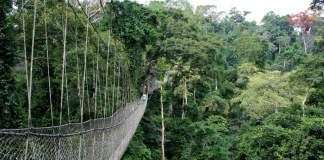 Canopy Walk: Kakum National Park, Ghana