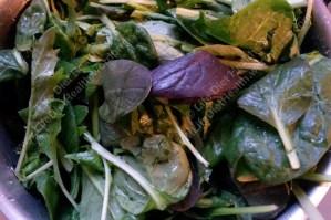 Spinach, kale, pak choi and jagello nero