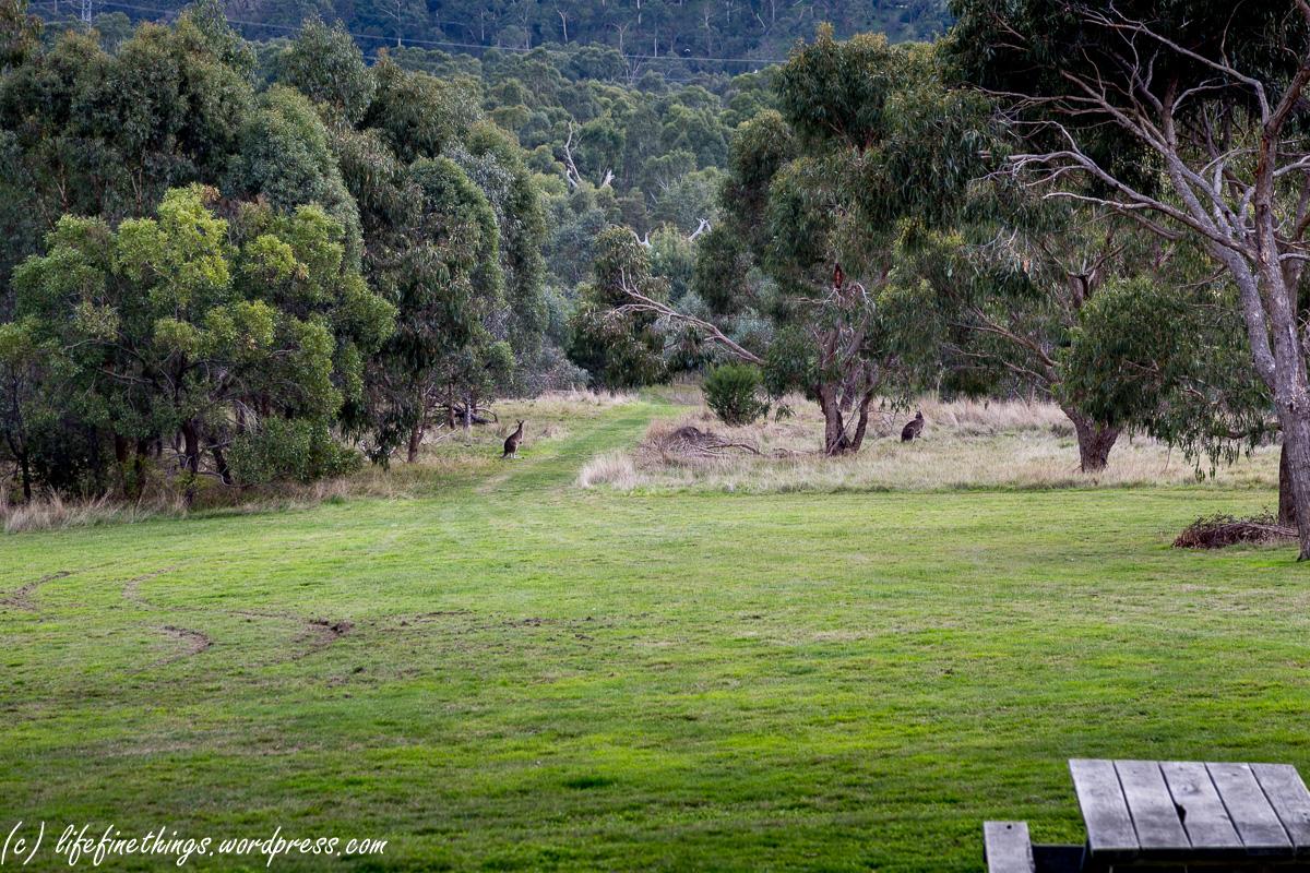 Прогулки по Мельбурну – Westerfolds Park