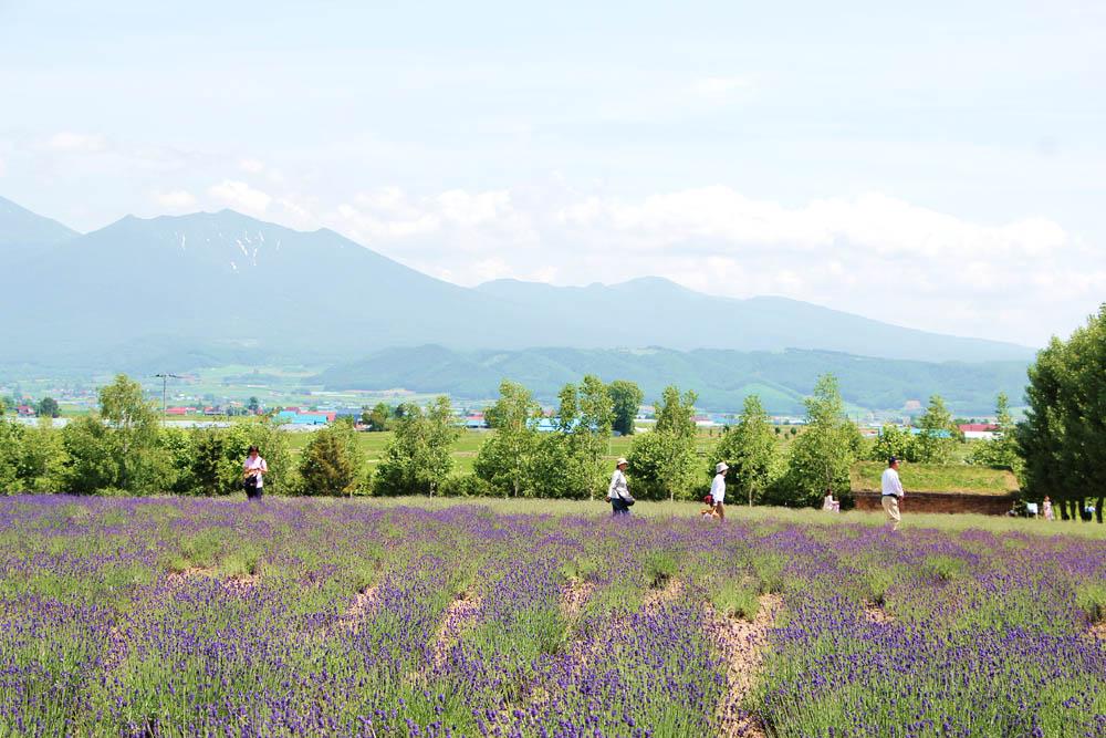 Farm Tomita, Furano, Japan