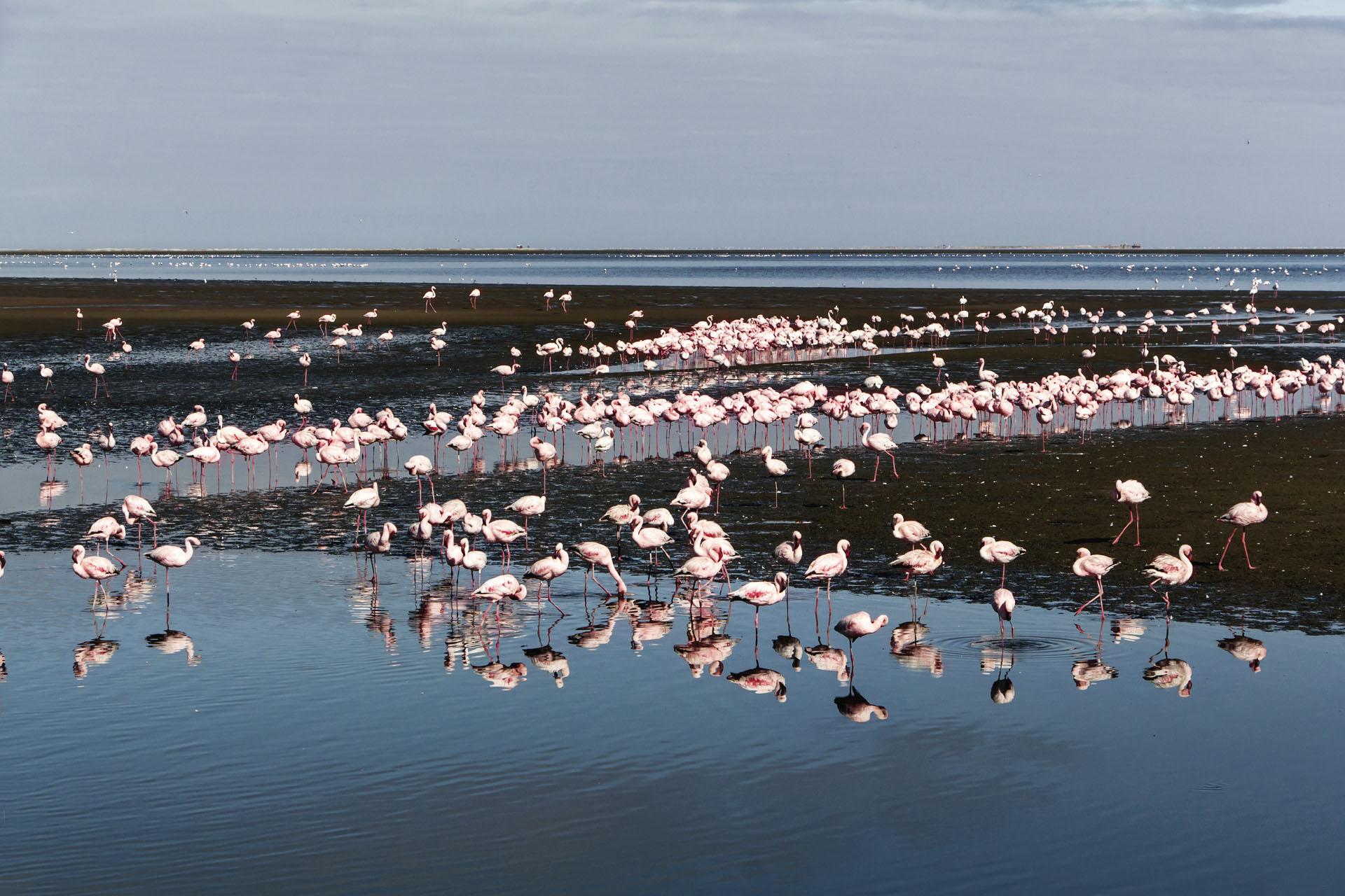 Flamingoes at Walvis Bay, Namibia