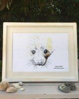 seal pup art print