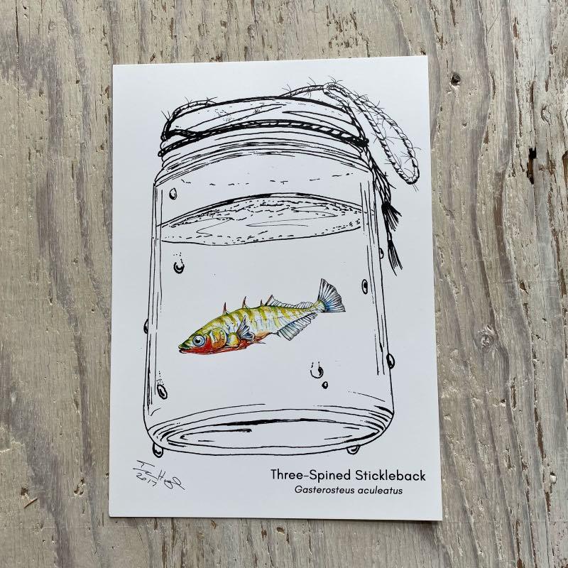 Stickleback art print