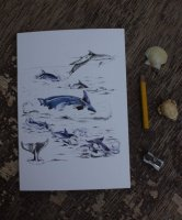 dolphins A5 notebook