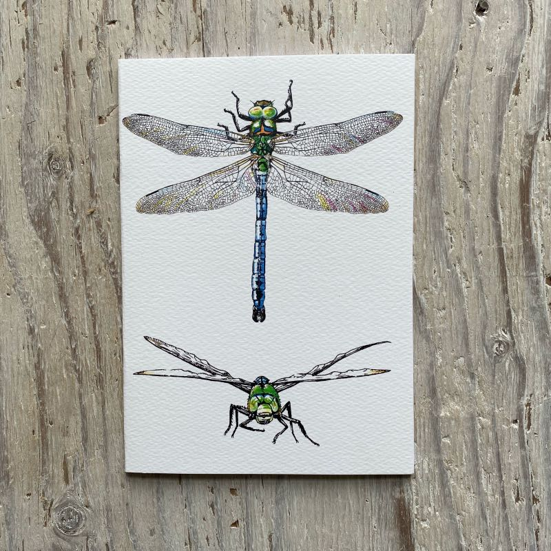 Emperor Dragonfly A5 Sketchbook