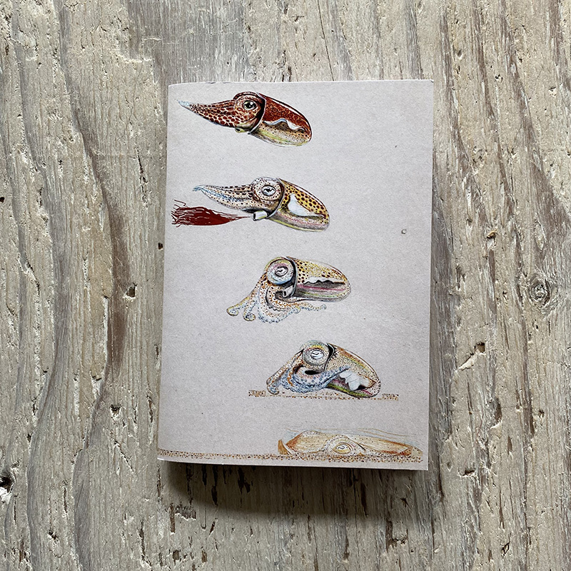 Little Atlantic Cuttlefish Pocket Notebook