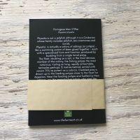 Portuguese man o' war pocket notebook