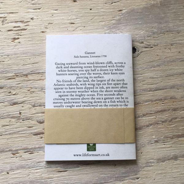gannet pocket notebook