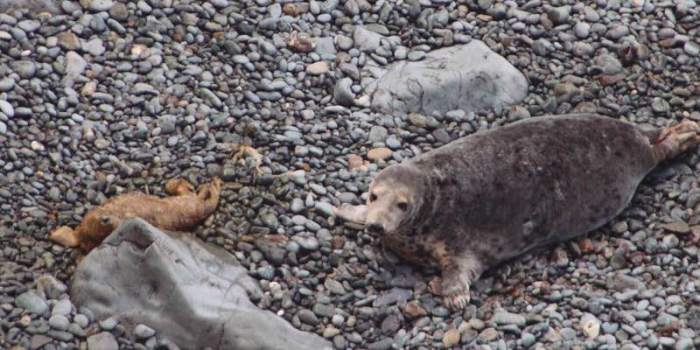 Encounters with Seal Pups