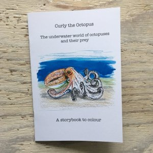 curled octopus story book to colour