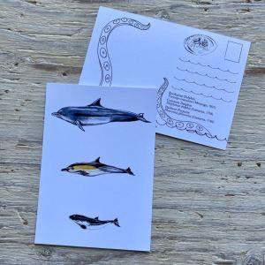 cetaceans postcard