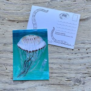 compass jellyfish postcard