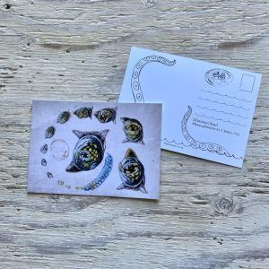 glutinous snail postcard