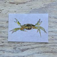 shore crab postcard