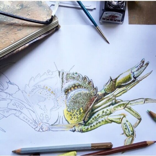 Shore-crab-to-colour