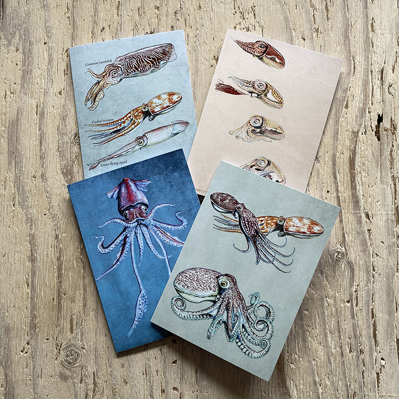 Cephalopods greetings card s set