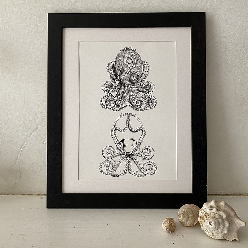 Curled Octopus Dorsal and Ventral Fine Art Print