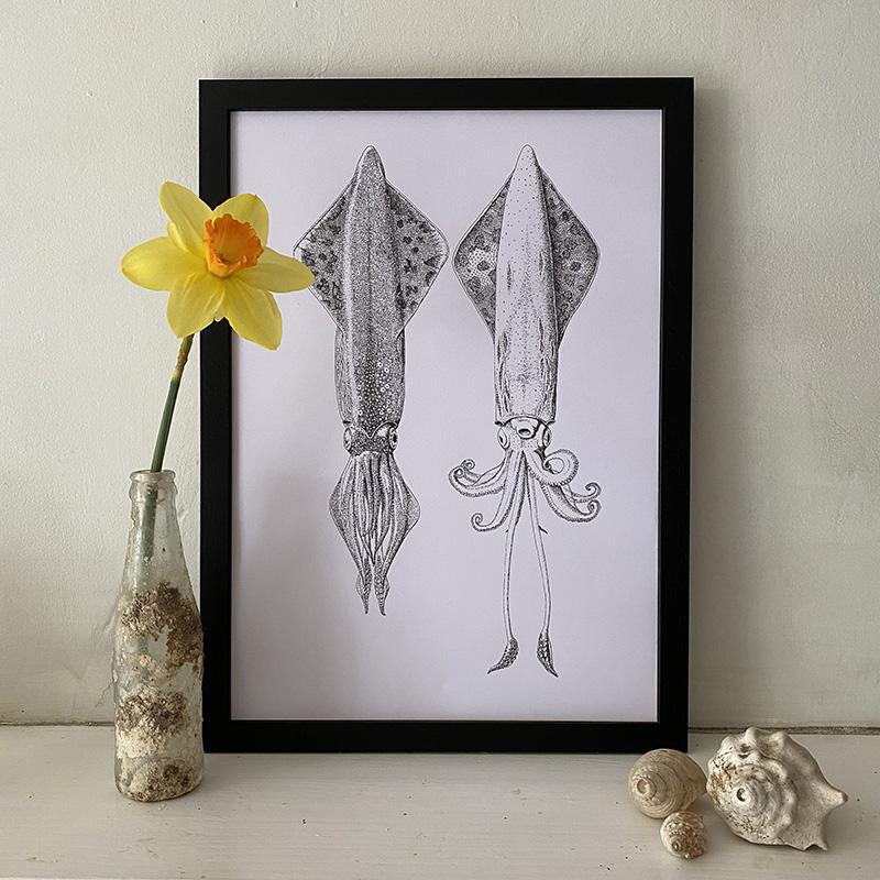 Veined Squid Dorsal & Ventrical Fine Art Print