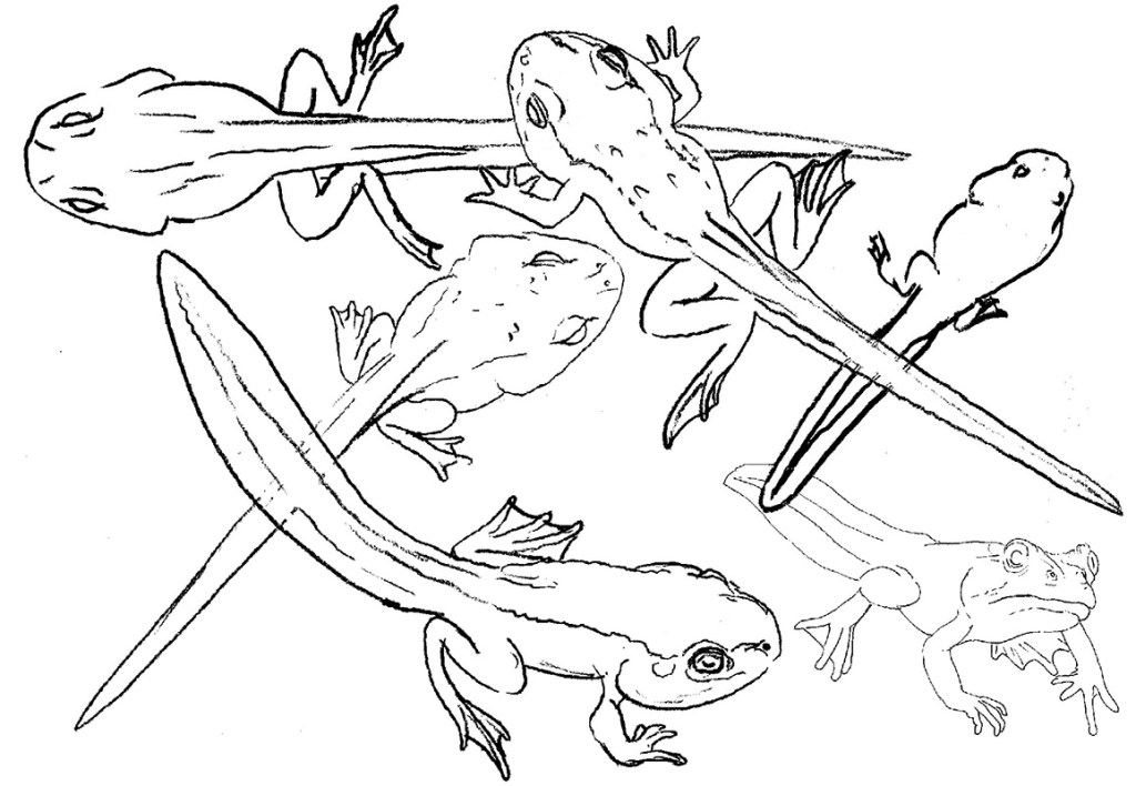 frog and toad tadpoles