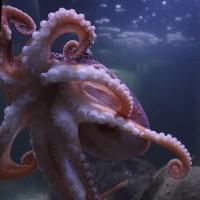 Curled octopus pendant