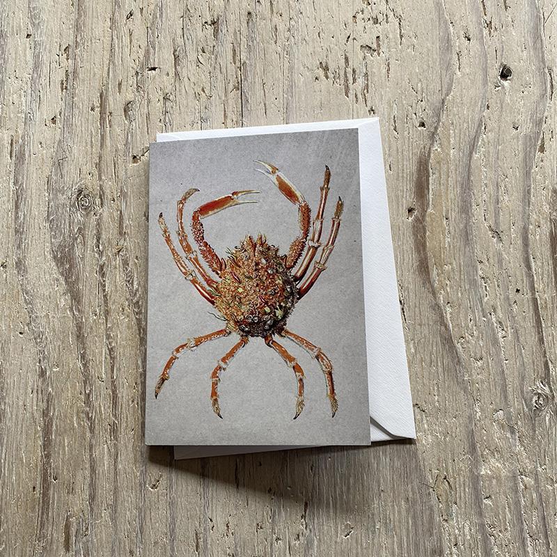 spider crab greetings card