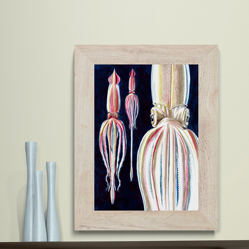 Limited edition giant squid fine art. the beautiful kraken