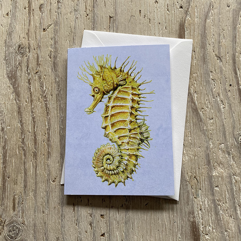 Spiny Seahorse Greetings Card